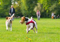 Trending Legislation: Dog Parks